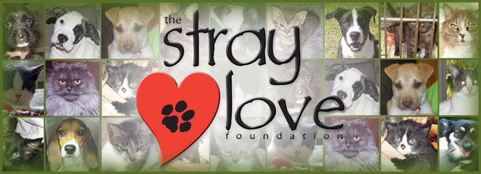 Stray Love Foundation, Inc.